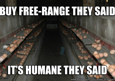 buy free range they said its humane they said