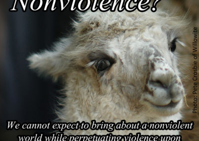 Posters about Nonviolence
